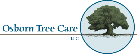 Professional Tree Care, Portland, Oregon