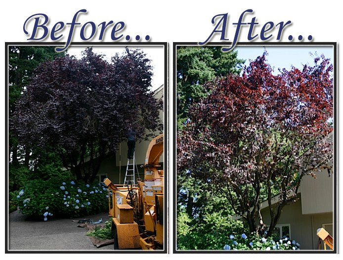 before&aftertree11