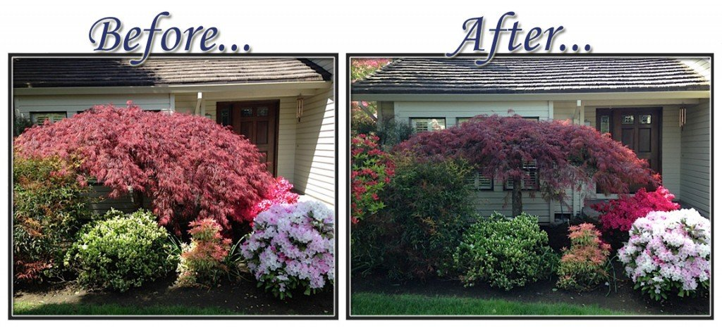 before&aftertree5