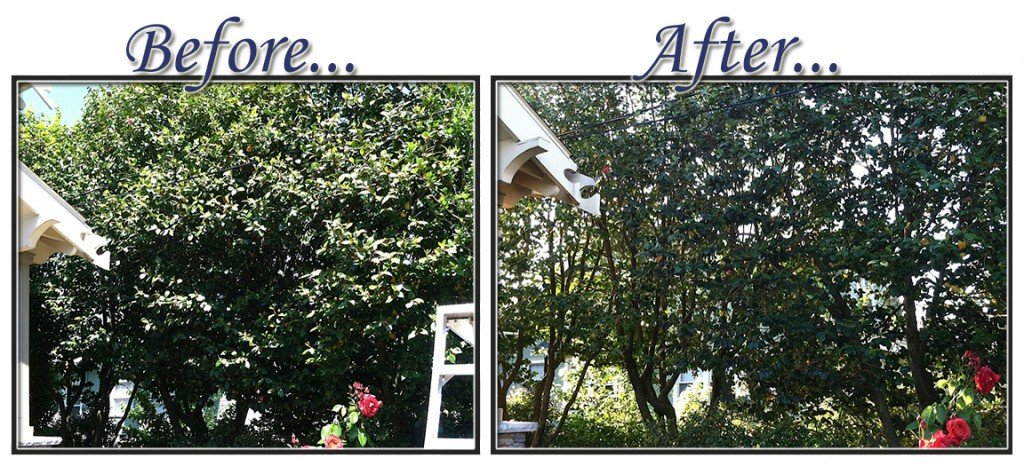 before&aftertree8
