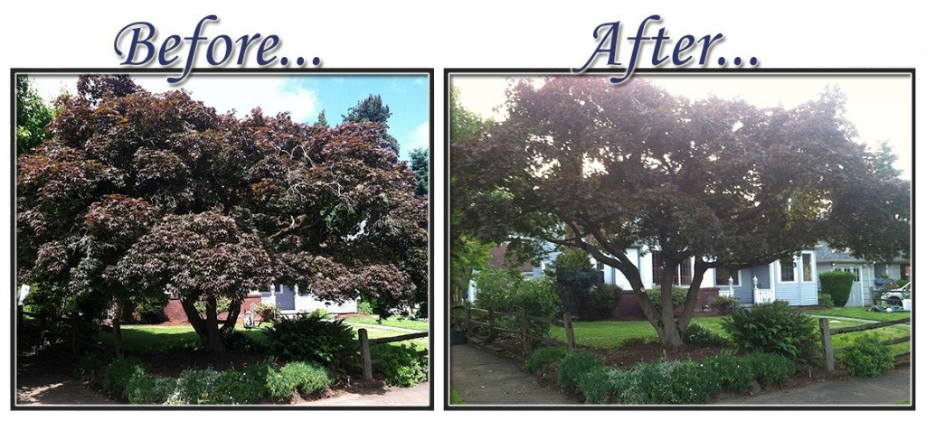 before&aftertree9
